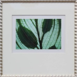 Jim Laser, Botanical Photograph By Jim Laser, 1998 found on Bargain Bro India from 1stDibs for $450.00
