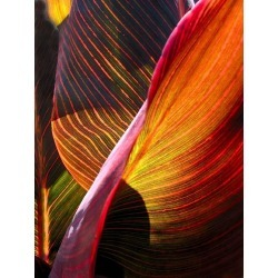 Geoffrey Baris, Tropical Plant Leaf Detail, Color Nature Photography by Geoffrey Baris, Botany, 2017 found on Bargain Bro Philippines from 1stDibs for $1575.00