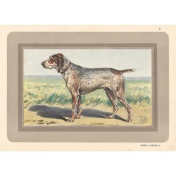 P. Mahler, Braque Charles X, French hound dog chromolithograph, 1930s, 1931 found on Bargain Bro Philippines from 1stDibs for $95.00