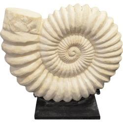 Andrianna Shamaris Sandstone Ammonite