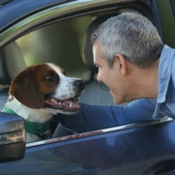 Dog Is Andy Cohen's Co-Pilot: I Adopted Wacha but He's the One Who Rescued Me—Watch! found on Bargain Bro from  for $10101649