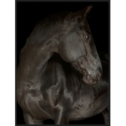 Giclee Black Stallion Wall Art, Brown/Black found on Bargain Bro from Ashley Furniture for USD $156.55