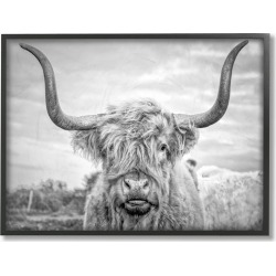 Stupell Black And White Highland Cow Photograph by Joe Reynolds Framed Art found on Bargain Bro India from Gilt City for $29.99