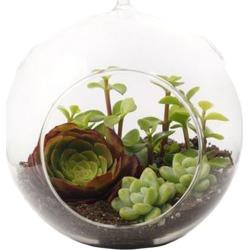 Globe Succulent Terrarium, Large
