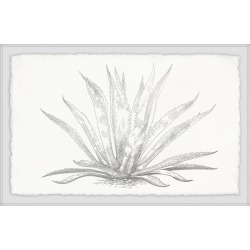 Marmont Hill Agave Desmettiana II Framed Painting Print found on Bargain Bro Philippines from Gilt for $379.99
