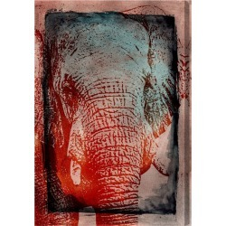 Elephant in the Wild by Oliver Gal