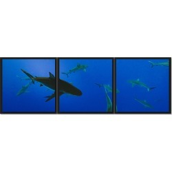 PTM Images Swimming With Sharks Framed High Gloss Laminate Triptych
