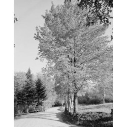 Posterazzi SAL255424046 USA New Hampshire Rumney Highway in Autumn Poster Print - 18 x 24 in.