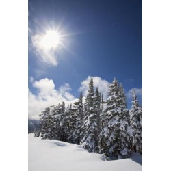 Posterazzi DPI1875511LARGE Timberline, Oregon Cascades, United States of America - Snow On The Trees & The Sunlight On Mount Hood Poster Print, 24.