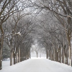 Posterazzi DPI1847320 Assiniboine Park Winnipeg Manitoba Canada - Grove of Trees in Winter Fog Poster Print, 17 x 17