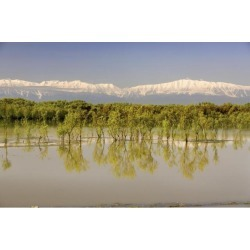 Posterazzi DPI1854863 Trees Along Shoreline with Mountains in The Background Poster Print, 18 x 12