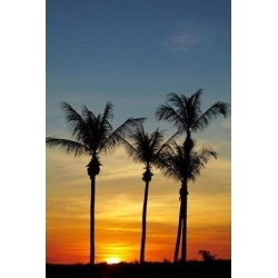 Posterazzi PDDAU01DWA4491 Beach Palm Trees Mindil Beach Darwin Australia Poster Print by David Wall - 19 x 29 in. found on Bargain Bro India from Newegg Canada for $62.67