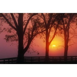 Posterazzi DPI1789590 Trees in The Sunrise Poster Print by Natural Selection Tony Sweet, 18 x 12