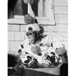 Posterazzi SAL9901547 Close-Up of a Chimpanzee Wearing a Clown Costume Poster Print - 18 x 24 in.