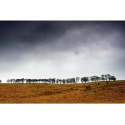 Posterazzi DPI1831288 Row of Trees in a Field Yorkshire Dales England Poster Print by John Short, 17 x 11