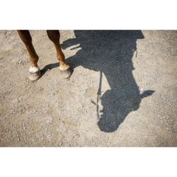 Posterazzi DPI12259565 Horse Legs & Shadow of Horse Head - Hampstead Maryland United States of America Poster Print - 19 x 12 in.