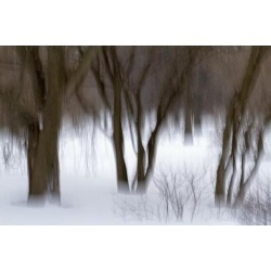 Posterazzi DPI12254752 Motion Blur of Trees - Quebec Canada Poster Print - 19 x 12 in.