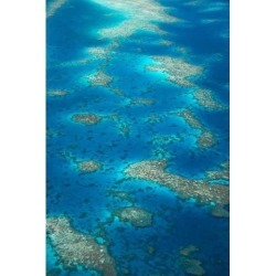 Posterazzi PDDAU01DWA2784 Undine Reef Great Barrier Reef Queensland Australia Poster Print by David Wall - 18 x 26 in.