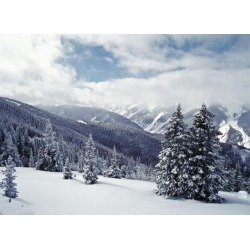 Posterazzi DPI1891766 Snow Covered Pine Trees On Mountain Poster Print, 18 x 13