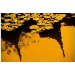 Lily Pond and Temple Reflection in Yellow, China Poster Print by Walter Bibikow DanitaDelimont (35 x 24)