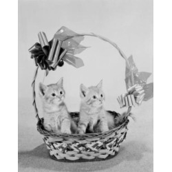 Posterazzi SAL255424721 Close Up of Two Kittens in Basket Poster Print - 18 x 24 in.
