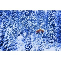 Posterazzi DPI17682 Small Lit Cabin in The Middle of A Winter Forest Poster Print by Corey Hochachka, 17 x 11
