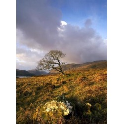 Glenveagh National Park County Donegal Ireland Lone Tree In Field Poster Print (12 x 16)