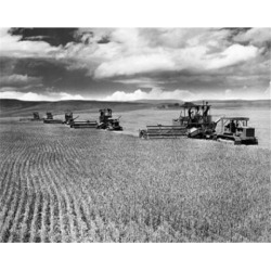 Posterazzi SAL2554619 Farmers Harvesting a Wheat Crop with a Combine in a Field Poster Print - 18 x 24 in.