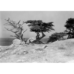 Posterazzi SAL255419121 USA California Monterey Trees & Sea Poster Print - 18 x 24 in.