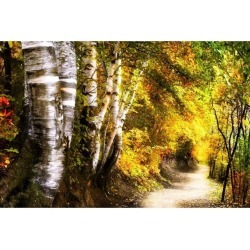Posterazzi DPI1829977 Birch Trees & Path Poster Print by Chris & Kate Knorr, 18 x 12