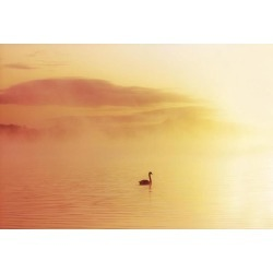Posterazzi DPI1808469 Lough Leane Killarney Co Kerry Ireland - Bird in The Water Covered by A Mist Poster Print by The Irish Image Collection, 18 x 12