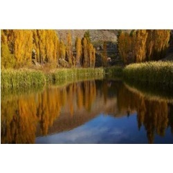 Posterazzi PDDAU02DWA6970 Poplar Trees in Autumn Bannockburn Cromwell Central Otago South Island New Zealand Poster Print by David Wall