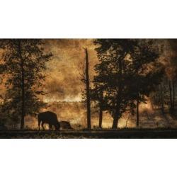 Posterazzi DPI12290229 Bison Athabascae Grazing Elk Island National Park - Alberta Canada Poster Print by Ron Harris, 20 x 11