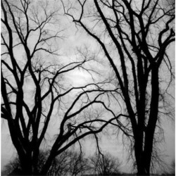 Posterazzi SAL255422511 Bare Trees in Winter Poster Print - 18 x 24 in.