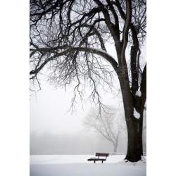 Posterazzi DPI1847309 Assiniboine Park Winnipeg Manitoba Canada - Bare Tree & Park Bench in Winter Poster Print, 12 x 19