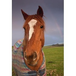 Posterazzi DPI1870231LARGE Portrait of A Horse with A Rainbow In the Sky Poster Print, 24 x 36 found on Bargain Bro Philippines from Newegg Canada for $86.13