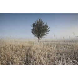 Frost On Tall Grass; Thunder Bay, Ontario, Canada Poster Print (19 x 12)