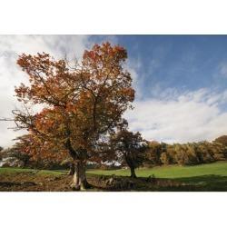 Posterazzi DPI1866595 Trees Northumberland England Poster Print, 18 x 12