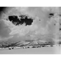 Posterazzi SAL255424727 Idaho Wood River Sheep on Snow Field Poster Print - 18 x 24 in.