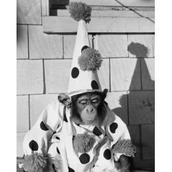 Posterazzi SAL9901546 Close-Up of a Chimpanzee Wearing a Clown Costume Poster Print - 18 x 24 in.