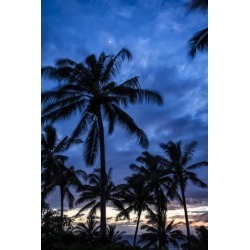 Posterazzi DPI12305826 Silhouetted Palm Trees Under A Cloudy Sky At Sunset - Hawaii United States of America Poster Print by Scott Mead, 12 x 19