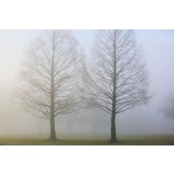 Posterazzi DPI1871386 Oregon Cascades Oregon United States of America - Trees Surrounded by Fog Poster Print, 19 x 12