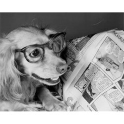 Posterazzi SAL255424723 Close Up of Dog Wearing Glasses & Reading Comics Poster Print - 18 x 24 in.