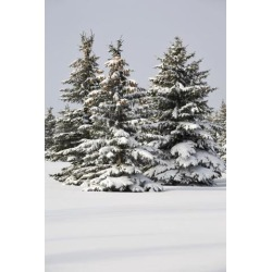 Posterazzi DPI1895287 Snow Covered Evergreen Trees - Calgary, Alberta, Canada Poster Print, 13 x 20