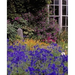 Posterazzi DPI1798349LARGE Primrose Hill Lucan Co Dublin Ireland - Lobelia Flowers Poster Print by The Irish Image Collection, 24 x 30 - Large found on Bargain Bro Philippines from Newegg Canada for $73.65