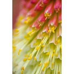 Posterazzi DPI1831965 Close Up of Flower Stamen Poster Print, 13 x 20