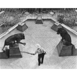 Posterazzi SAL2558084B High Angle View of an Animal Trainer with Two Lions Performing in a Circus Poster Print - 18 x 24 in. found on Bargain Bro India from Newegg Canada for $55.18