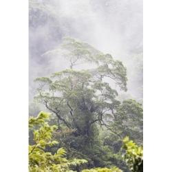 Posterazzi DPI1867001 Mist Over A Rainforest Republic of Costa Rica Poster Print, 12 x 19