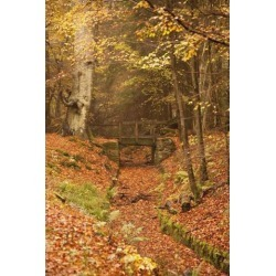 Posterazzi DPI1868785 Northumberland England - A Creek Through the Forest In Autumn with A Bridge Crossing Over It Poster Print, 12 x 19