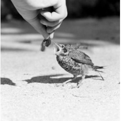 Posterazzi SAL255421871 Person Feeding Bird Poster Print - 18 x 24 in.